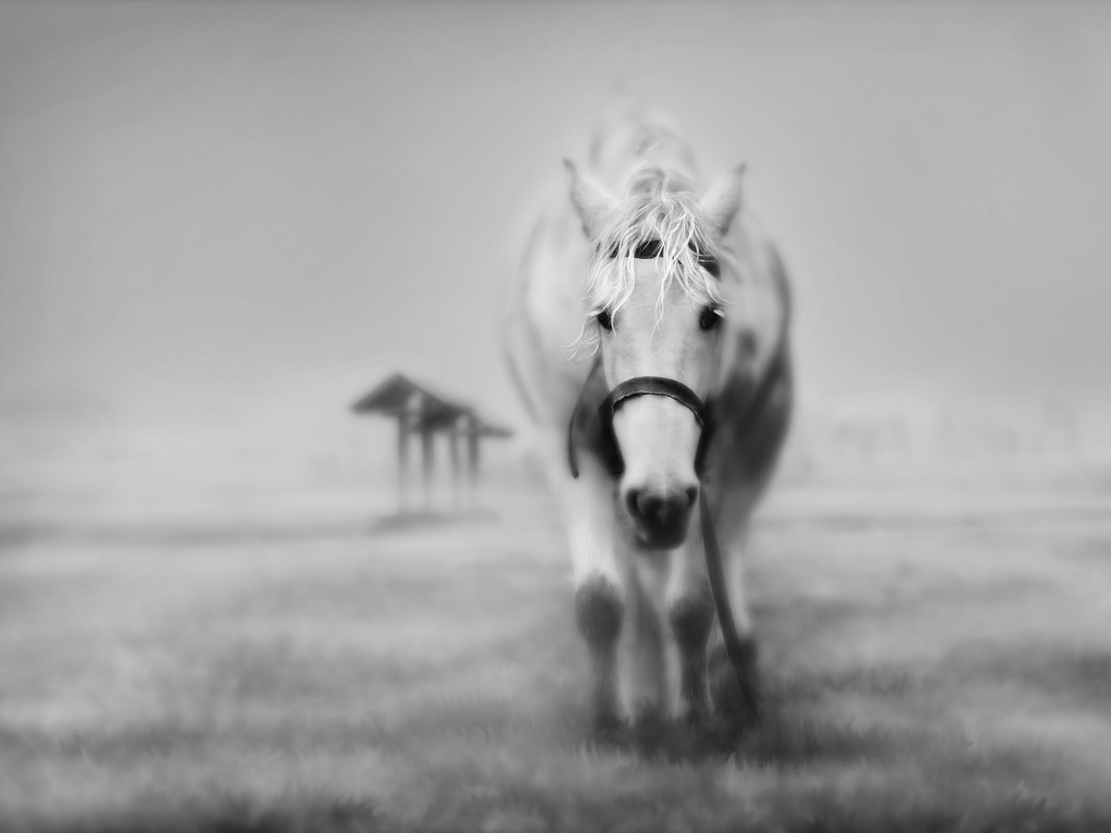 1600x1200 Black and white horse wallpaper, music and dance ...