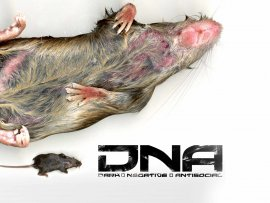 DNA rat (click to view)